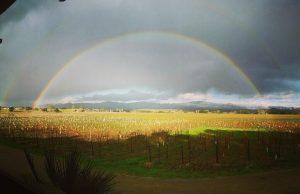 Vineyard Rainbow at Kalyra Winery