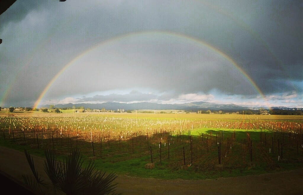 Vineyard Rainbow at Kalyra Winery